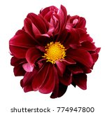 Stock photo red dahlia flower on a white isolated background with clipping path for design closeup 774947800