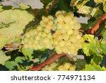 wine box  wine grapes  costa... | Shutterstock . vector #774971134