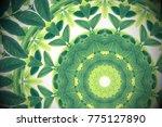 green leaves with kaleidoscope... | Shutterstock . vector #775127890