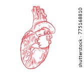 red human heart with aorta ... | Shutterstock .eps vector #775168810
