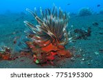 underwater coral and sea lily... | Shutterstock . vector #775195300