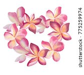 pink plumeria wreath. heart... | Shutterstock . vector #775259974