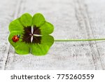 Stock photo four leaf clover with ladybug on wood copy space 775260559