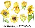 Set Botanical Illustration ...