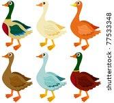 Cartoon Vector Of Ducks  Goose...
