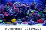 Amazing Coral Reef Aquarium...