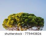 tree top in the sun | Shutterstock . vector #775443826