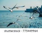 Seagull Flying At Bangpu...