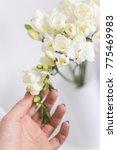 freesia flowers bouquet white | Shutterstock . vector #775469983
