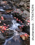 Small photo of leaves along Duck Brook, Acadia National Park, ME