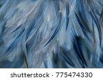 bird chickens feather texture... | Shutterstock . vector #775474330