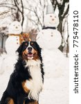 happy bernese mountain dog... | Shutterstock . vector #775478110
