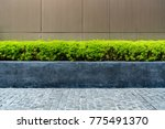 green trimmed plant  in black... | Shutterstock . vector #775491370