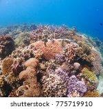 coral leef garden in orango... | Shutterstock . vector #775719910