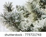 green pine branches covered... | Shutterstock . vector #775721743