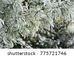 green pine branches covered... | Shutterstock . vector #775721746
