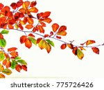 artistic colors of nature | Shutterstock . vector #775726426