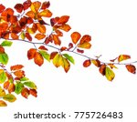 artistic colors of nature | Shutterstock . vector #775726483
