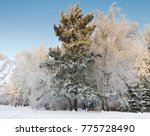 snow covered bench in the... | Shutterstock . vector #775728490