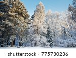 the snow covered winter park in ... | Shutterstock . vector #775730236