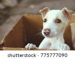 Stock photo  cute puppy in a box 775777090