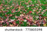autumn landscape in a rainy day.... | Shutterstock . vector #775805398