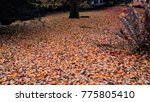 autumn landscape in a rainy day.... | Shutterstock . vector #775805410