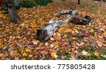 autumn landscape in a rainy day.... | Shutterstock . vector #775805428