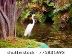 Great Egret On The Background...