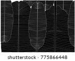 tropical leaves design...   Shutterstock .eps vector #775866448