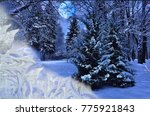 View Of Fabulous Snowy Forest...