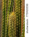 Small photo of green cactus acicular leaf