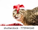 cat in a white background... | Shutterstock . vector #775944160