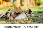 cat with heart leaf. | Shutterstock . vector #775951489