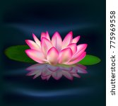 Lotus. Water Lily. Drawing A...