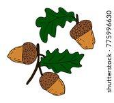 acorn vector illustration   Shutterstock .eps vector #775996630