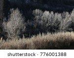 beautiful  autumn  forest | Shutterstock . vector #776001388