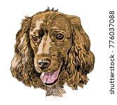 hand drawn vector illustration... | Shutterstock .eps vector #776037088