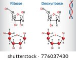 ribose and deoxyribose... | Shutterstock .eps vector #776037430