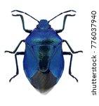 bug zicrona caerulea on a white ... | Shutterstock . vector #776037940