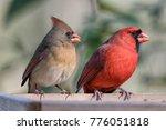 Northern Cardinal Pair At Feeder