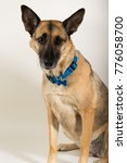 a beautiful german sheppard.... | Shutterstock . vector #776058700