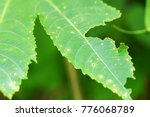 close  up image leaf green | Shutterstock . vector #776068789