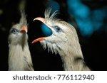 beak of a bird | Shutterstock . vector #776112940