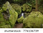 small forest with trees and... | Shutterstock . vector #776136739