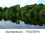 rain forest mirrored in waters  ... | Shutterstock . vector #77615074