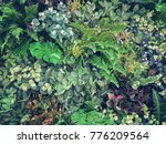 vintage tone of variety of... | Shutterstock . vector #776209564