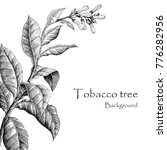 Tobacco Tree Hand Drawing...