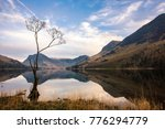 Buttermere Tree And Calm...