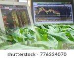 corn crop field season and... | Shutterstock . vector #776334070
